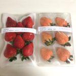 イチゴ あまおう&淡雪 食べ比べ ~めでたい日には紅白のイチゴを~